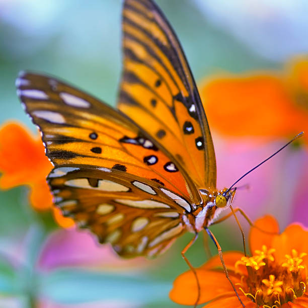 Gulf Fliterary Butterfly Wall Art