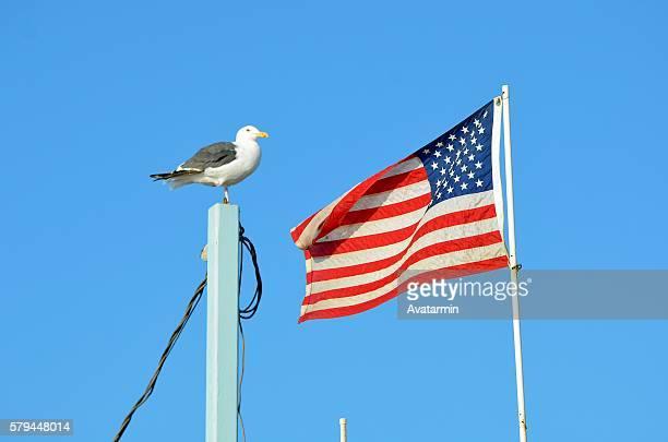 gull and banner at Venice beach - Los Angeles - California - USA