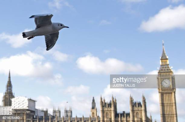 A gull flies above the River Thames opposite to the Houses of Parliament in central London on November 7 2016 Prime Minister Theresa May said Britain...