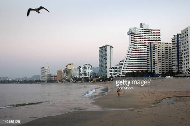 A gull flies along the hotellined beach early February 29 2012 in Acapulco Mexico One of Mexico's top tourist destinations Acapulco has suffered a...
