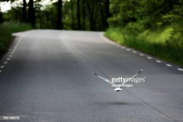 Gull flying above road