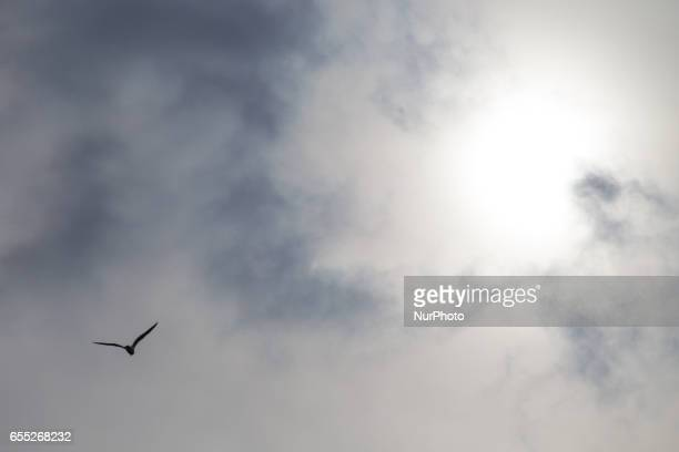 A gull is seen flying into the distant sky in Bydgoszcz Poland on 19 March 2017
