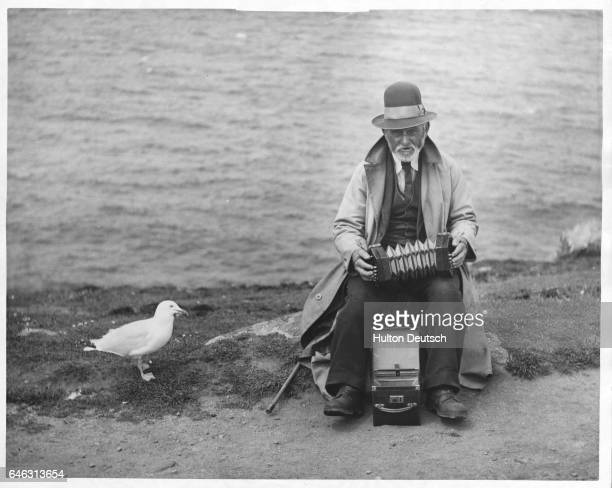 A gull named Jack is always in the audience when Old Andrew plays the concertina along the cliffs of Land's End England
