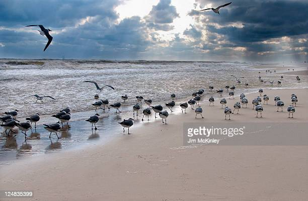 Gulls at beach