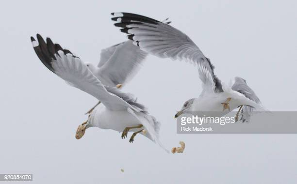 Gulls compete for the airborne material Mohamed Tahir who immigrated from Eritrea five years ago likes to feed the birds at Cherry beach He brings...