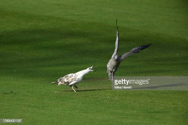 Gulls fight in the covers during Day 2 of the Bob Willis Trophy match between Sussex and Hampshire at The 1st Central County Ground on August 02,...