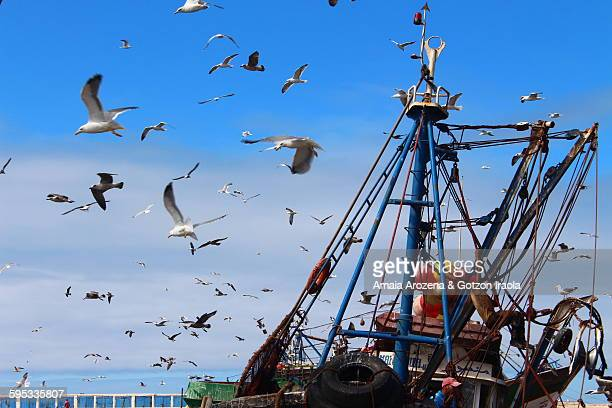 Gulls fluttering around a ship that landed fish