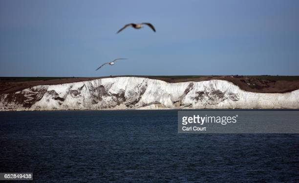 Gulls fly near the White Cliffs of Dover on March 13 2017 in Dover England The White Cliffs of Dover are identified as a British Icon and as they...