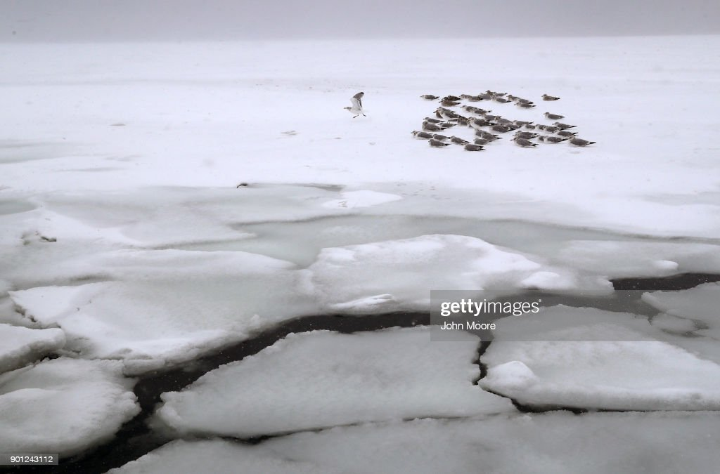 Gulls rest on the ice on the Long Island Sound on January 4, 2018 in West Haven, United States. The 'bomb cyclone' dumped heavy snows in New England as the storm system moved up the U.S. east coast.
