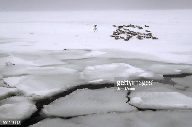 Gulls rest on the ice on the Long Island Sound on January 4 2018 in West Haven United States The bomb cyclone dumped heavy snows in New England as...