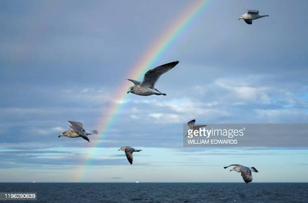 Guls fly around the Good Fellowship fishing trawler, while its nets trawl the sea bed for prawns and other crustaceans, as a rainbow rises above the...