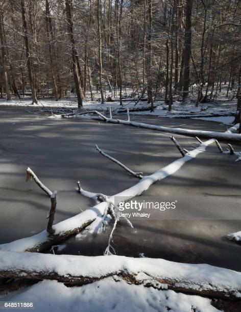 Gum Swamp, Snow, Winter, Smokies