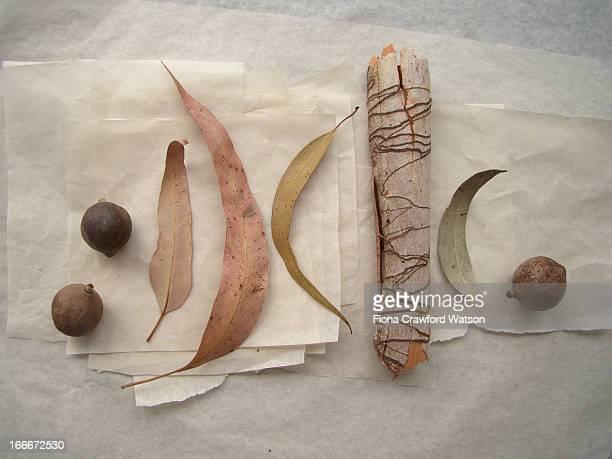 gum tree bark, macadamia nuts and eucalpytus