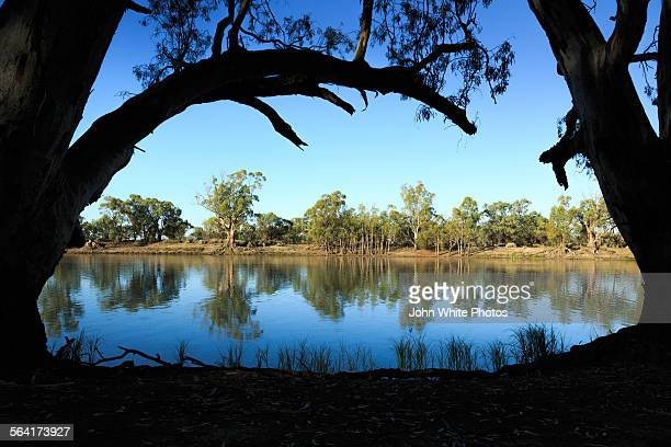 Gum trees and the river Murray. Australia.