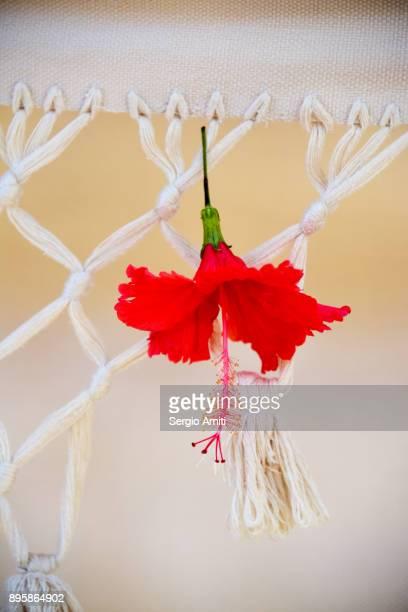 Gumamela (Chinese Hibiscus)