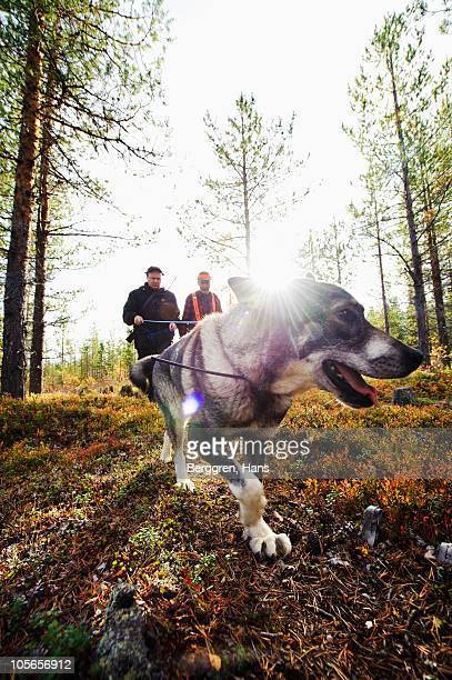 gun dog walking in forest with two hunters - hunting dog stock pictures, royalty-free photos & images