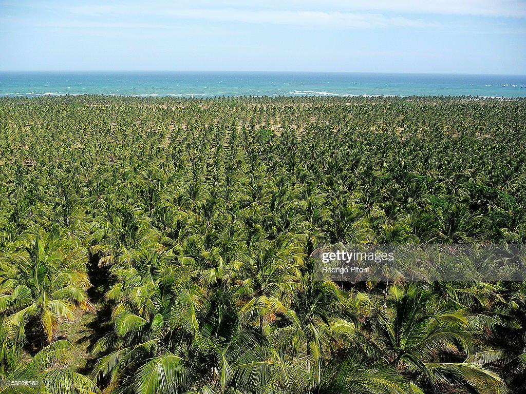 Gunga beach : Foto de stock