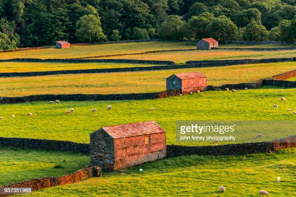 Gunnerside drystone walls and traditional barns in the Yorkshire Dales.