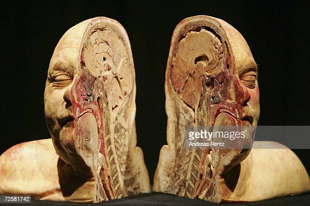 Gunther von Hagens known as The Plastinator shows a exhibit at the Plastinarium workshop and showroom during the inauguration on November 16 2006 in...