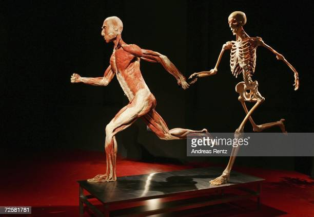 """Gunther von Hagens, known as """"The Plastinator"""", shows a runner exhibits at the Plastinarium workshop and showroom during the inauguration on November..."""