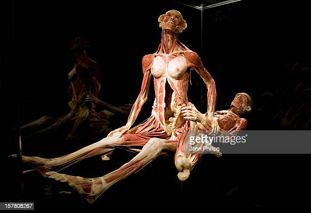 Gunther Von Hagens Unveils Latest Additions To His Exhibitions Of Real Dead Bodies Preserved By The Plastisizing Technique He Developed At The O2...