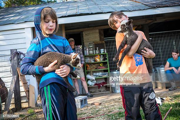 Gus Martone and Clay Martone 7 cradle baby goats as their moms Kirstin and Mindy MartoneGulling look on at the Lucky Clover microfarm in Silver...