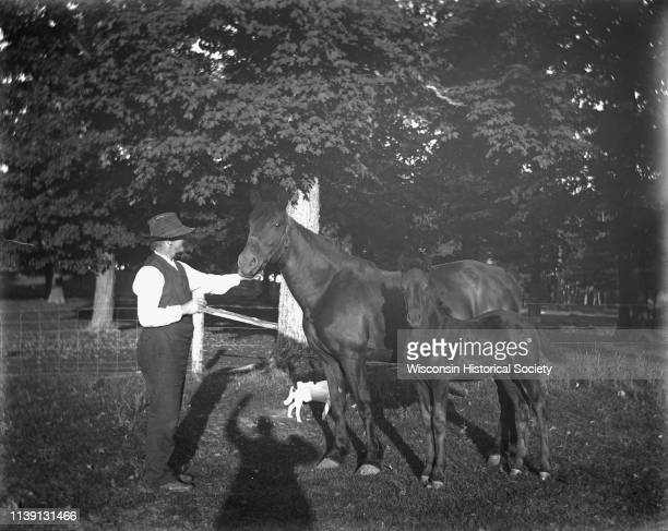 Gust Wendorf in the horse pasture holding the halter of a mare while her colt stands along side her Johnson Creek Wisconsin 1901 A small dog stands...