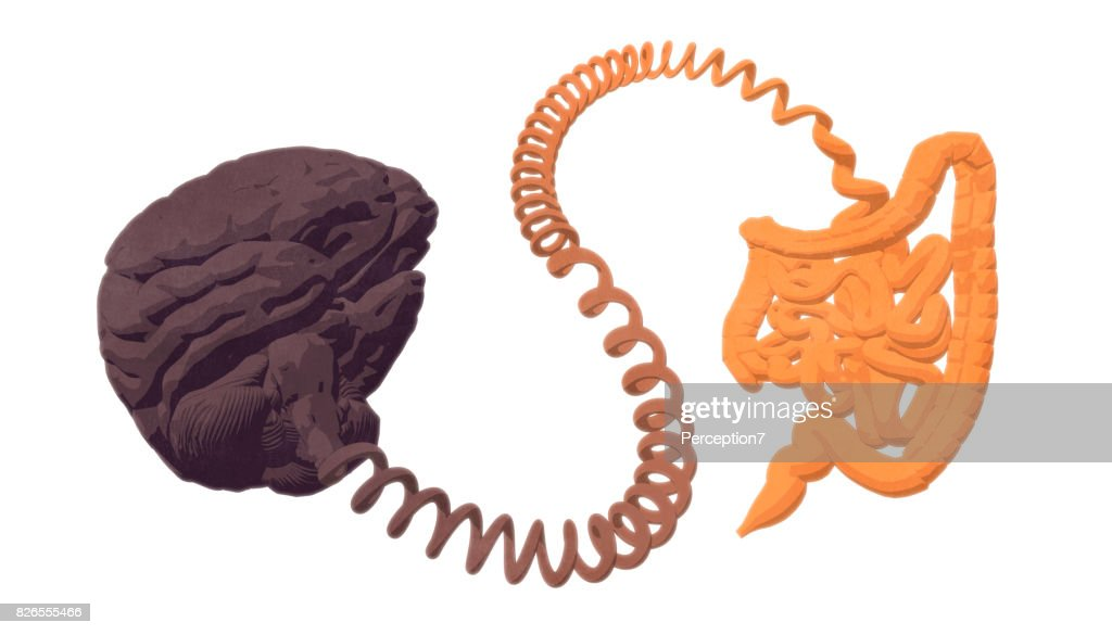 Gut–brain axis. The gut-brain connection. : Stock Photo