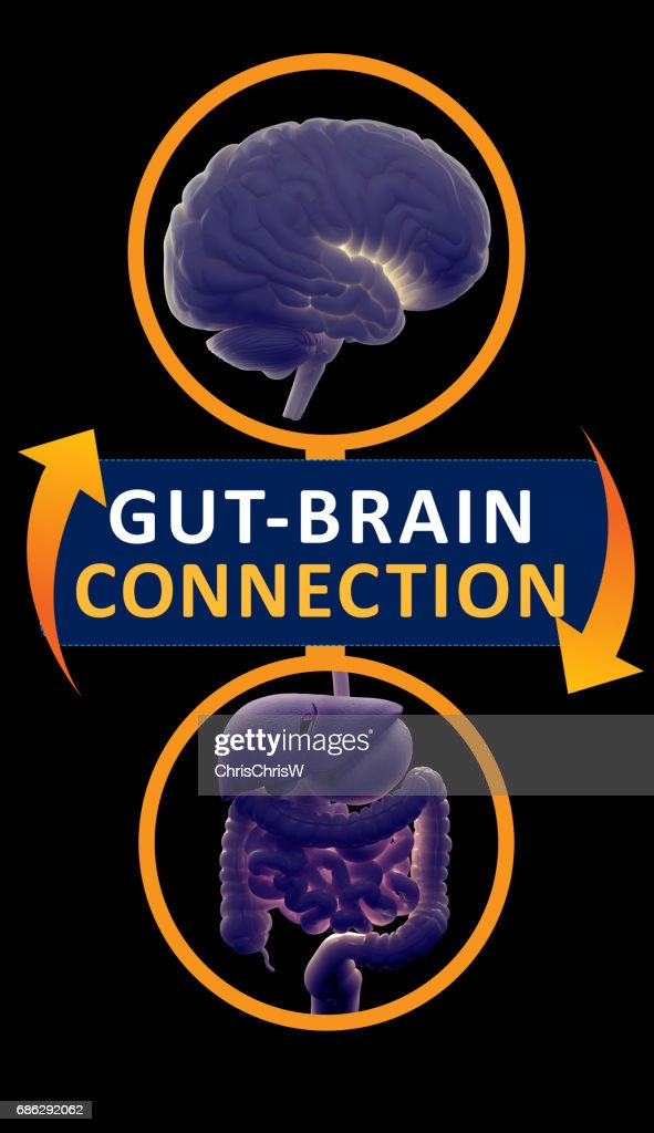 Gut-brain connection or gut brain axis. Concept art showing a connection from the gut to the brain. 3d illustration. : Stock Photo
