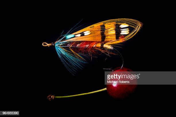 gut-eyed durham ranger salmon fly on cherry - fly casting stock pictures, royalty-free photos & images