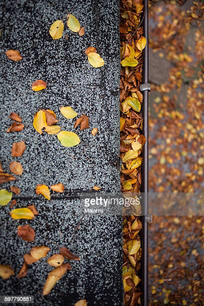 Gutter, roof and leaves. Fall