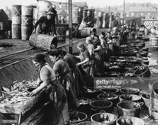 Gutting and cleansing herring at the quayside Gutting and cleansing herring at the quayside 14 October 1937 'The Herring Fishing Fleet at Lowestoft...