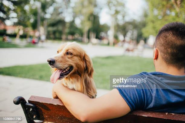 guy and his dog, golden retriever,city park. - canine stock pictures, royalty-free photos & images