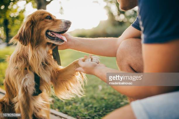guy and his dog, golden retriever,city park. - dog stock pictures, royalty-free photos & images