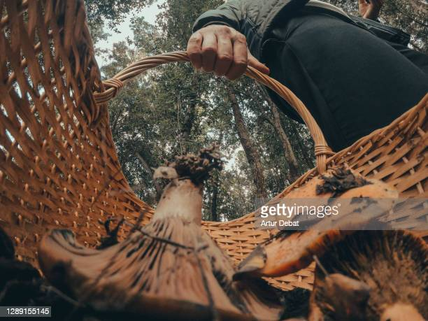 guy hunting edible mushrooms in the forest during autumn with creative point of view from inside the basket. - low angle view stock pictures, royalty-free photos & images