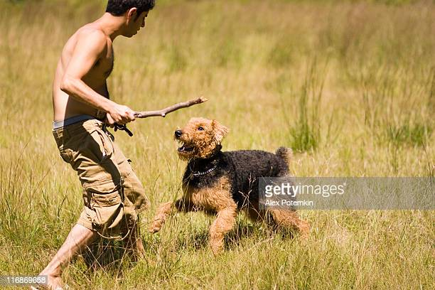 guy play with dog - dog fight stock pictures, royalty-free photos & images