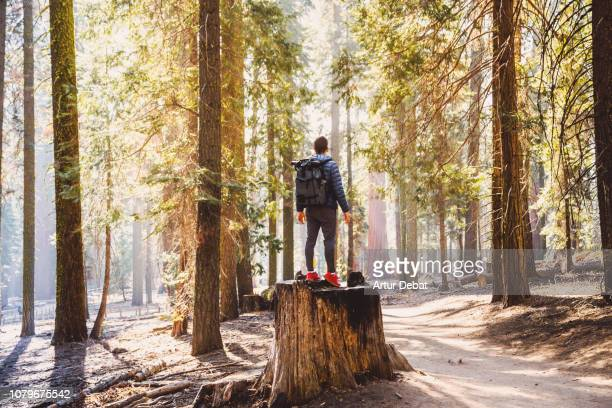 guy with huge trees from mariposa grove in yosemite national park. - grove_(nature) stock pictures, royalty-free photos & images