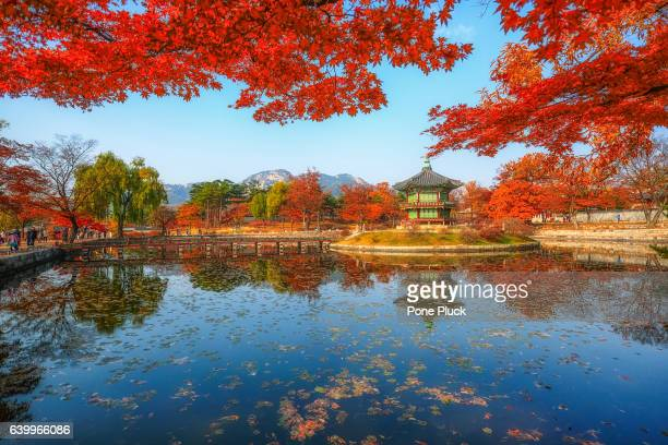 gyeonbokgung palace in autumn,south korea - gyeongbokgung stock photos and pictures