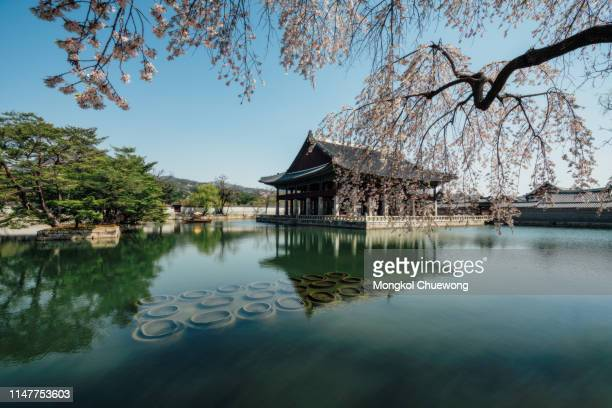 gyeongbokgung palace with cherry blossom or call sakura in spring with blue sky and clouds at seoul city, south korea. - gyeongbokgung palace 個照片及圖片檔