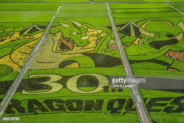 Gyoda is a mostly flat city full of rice paddies One of these paddies has been turned into a giant artistic canvas Different strains of rice which...