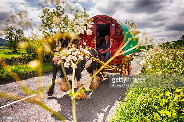 gypsey's travelling towards the appleby horse fair, near kirkby lonsdale, cumbria, uk. - gypsy caravan stock pictures, royalty-free photos & images