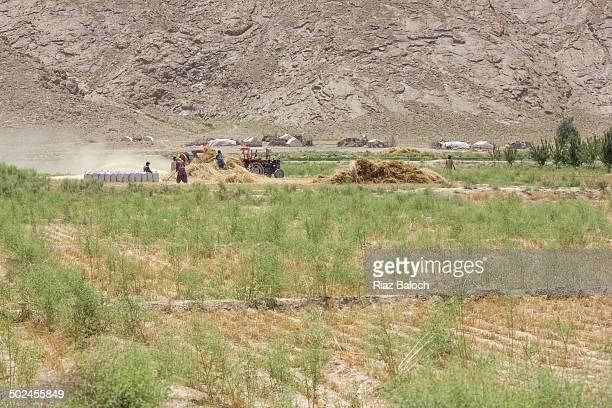 Gypsies using thresher