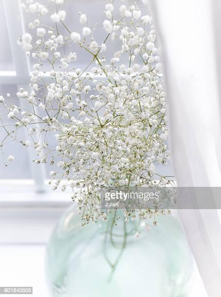 Gypsophila flowers in a glass vase on window sill