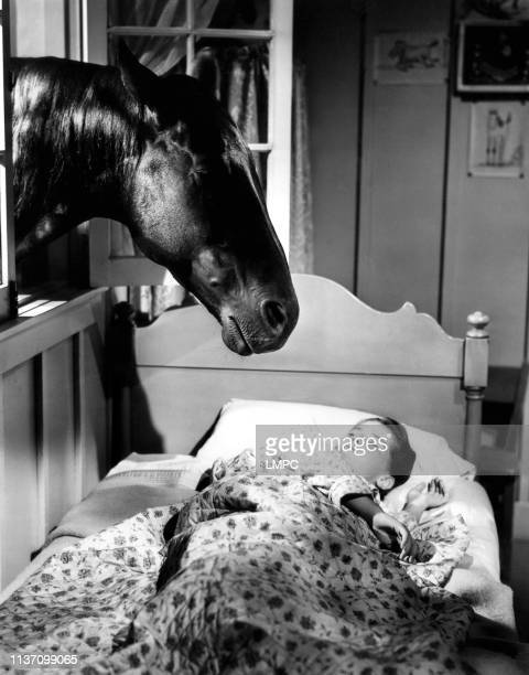 Gypsy Colt poster Donna Corcoran 1953