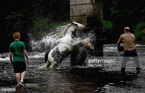 Gypsy men wash and prepare their horses for sale in the River Eden at the Appleby Horse Fair on June 4 2016 in Appleby England The annual horse...