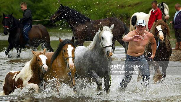 A gypsy takes his horses for a presale wash in the River Eden at Appleby Horse Fair June 5 2004 in Appleby England Appleby Horse Fair has existed...
