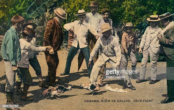 Habana Rina de Gallos Cockfight 1900s Artist Unknown