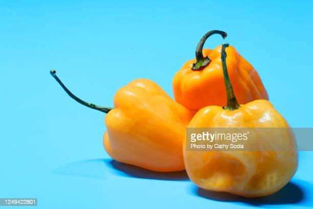 habanero peppers - vegetais - fotografias e filmes do acervo