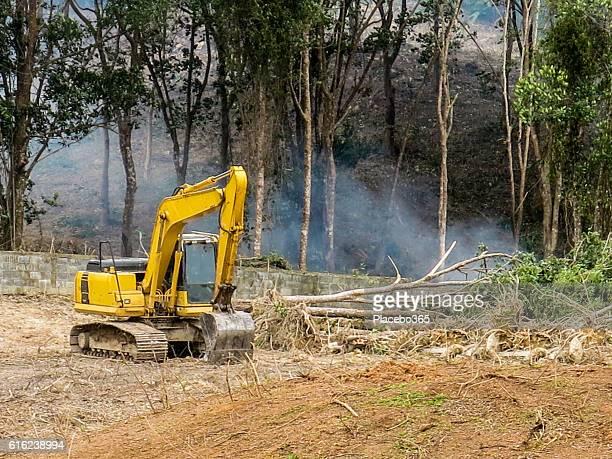 Habitat Loss Rainforest Deforestation Digger Fire Forest Clearing