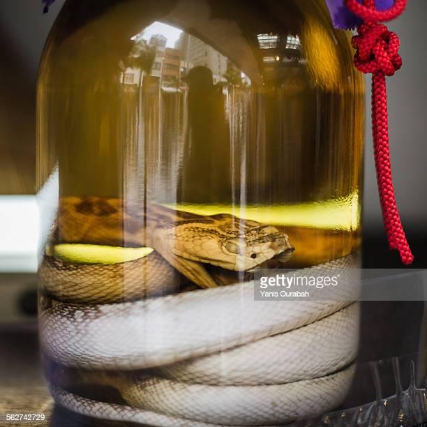 Habushu snake sake alcohol drink from Okinawa